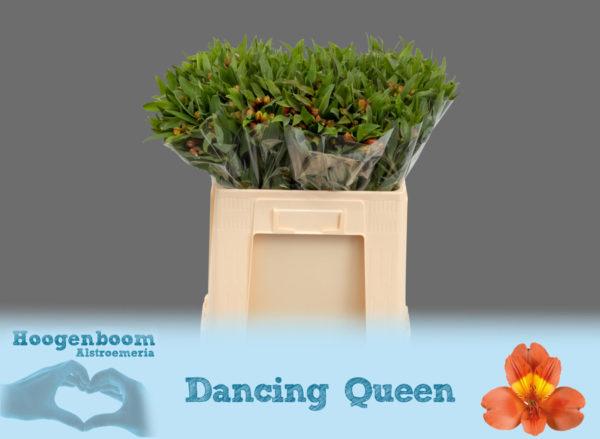 Dancing Queen40