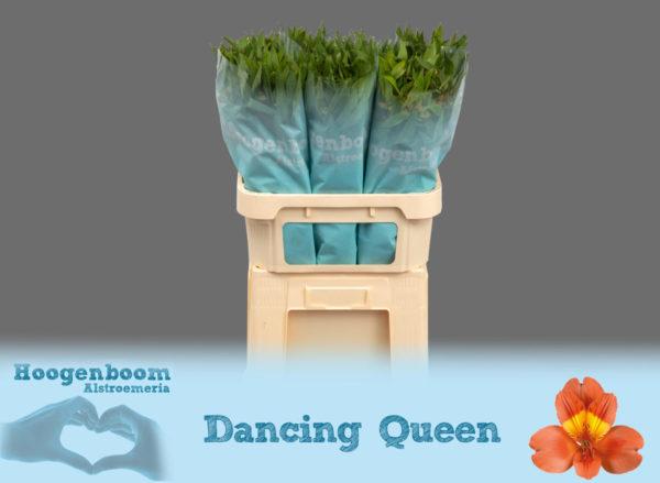Dancing Queen75