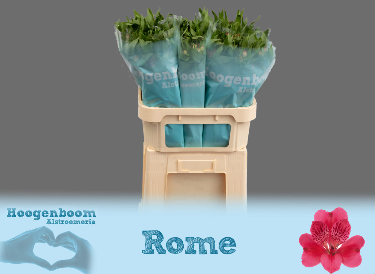 Rome75